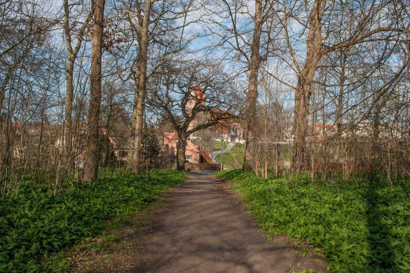 Een Weg in het meest forrest in Vordingborg Denemarken royalty-vrije stock afbeelding
