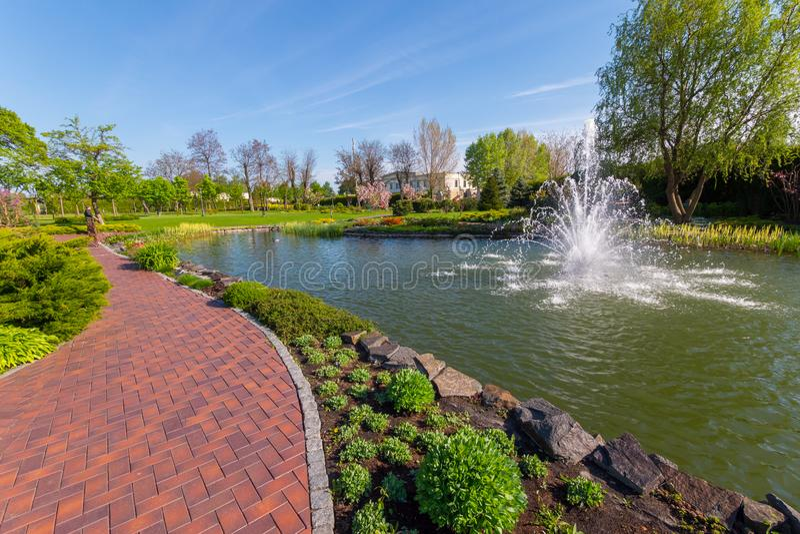 Een weg in het park die naast een kleine vijver met een fontein overgaan Met groene gazons rond en bloeiende bomen stock afbeeldingen