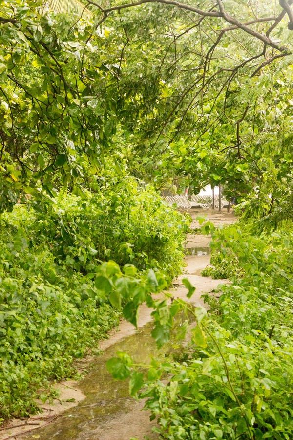 Een weg leidt door mangroven in Playa Langosta Het water bevindt zich van de zware regenval van Tropisch Onweer Nate aangezien he stock foto's