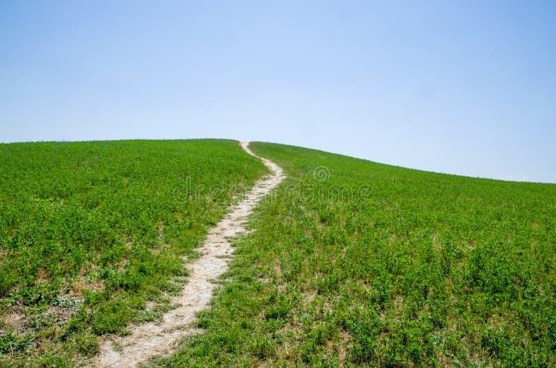 Een weg op het groene gras royalty-vrije stock afbeeldingen