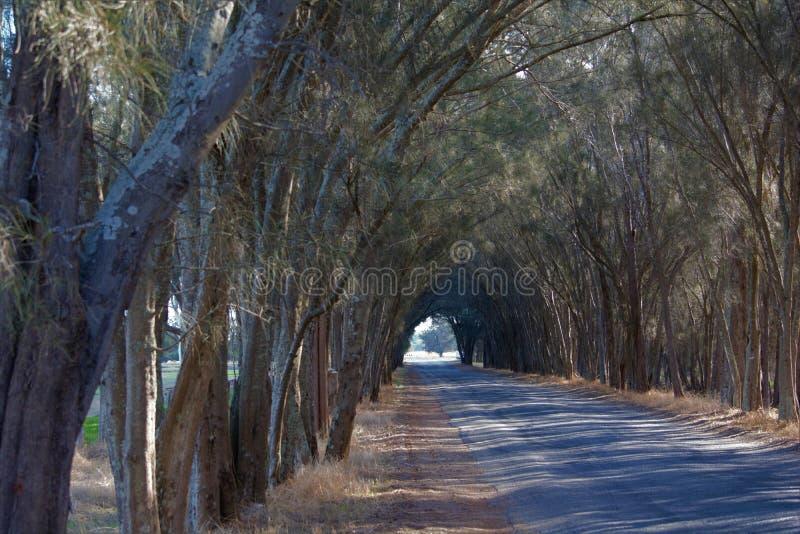 Een weg in westelijk Australië dat een boog van bomen heeft royalty-vrije stock fotografie