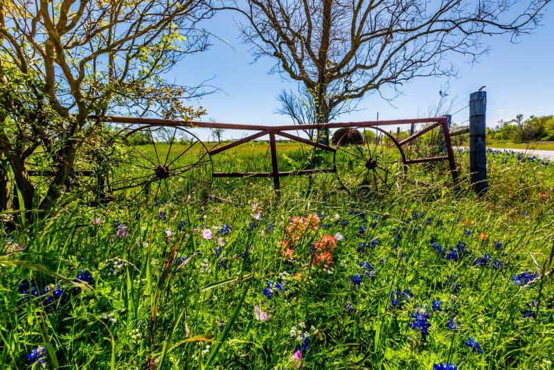 Een Weide met Rond Hay Bales en Vers Texas Wildflowers stock afbeeldingen