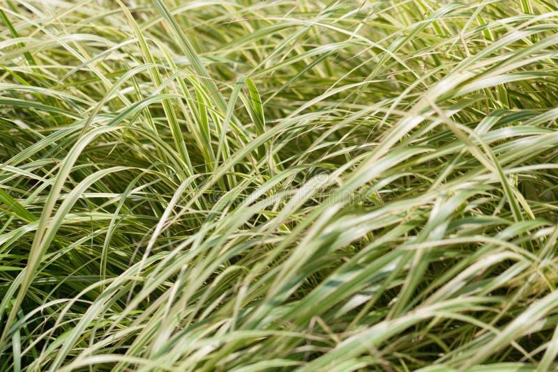 Een weidehoogtepunt van groen lang gras royalty-vrije stock afbeeldingen