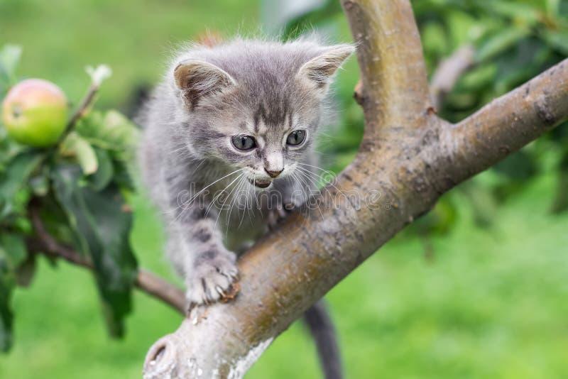 Een weinig grijs katje op een boom in de zomer op vage groen stock fotografie