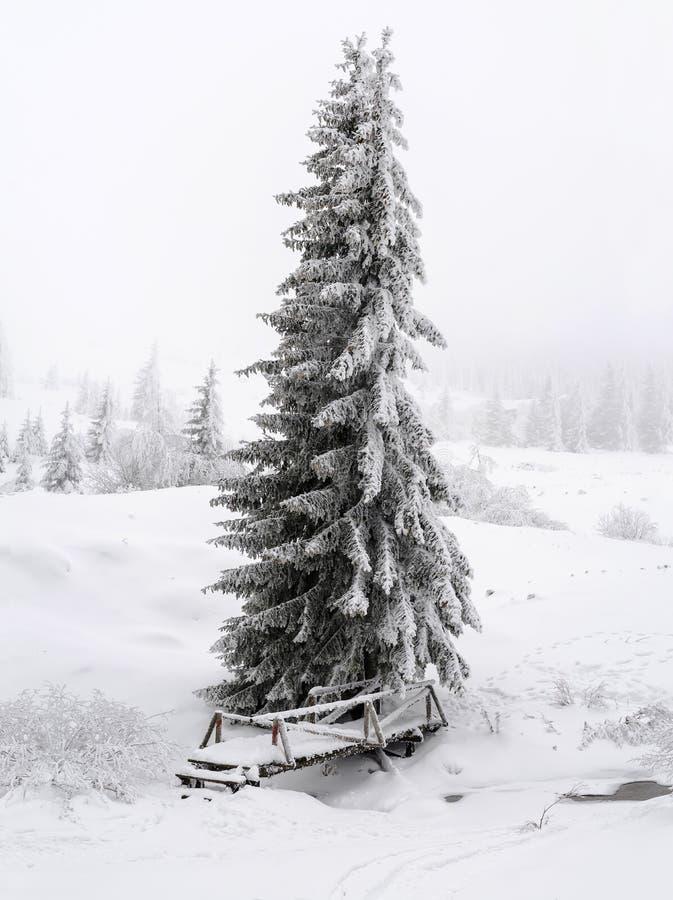 Een weinig houten brug over een bergstroom Lange naaldboom in het centrum van de foto en de partijen van sneeuw royalty-vrije stock afbeelding