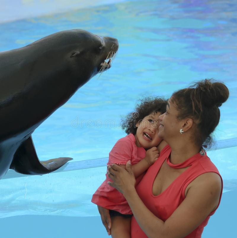 Een weinig Meisje Bang van een Vriendschappelijke Zeeleeuw in Delphinario, Sono stock foto
