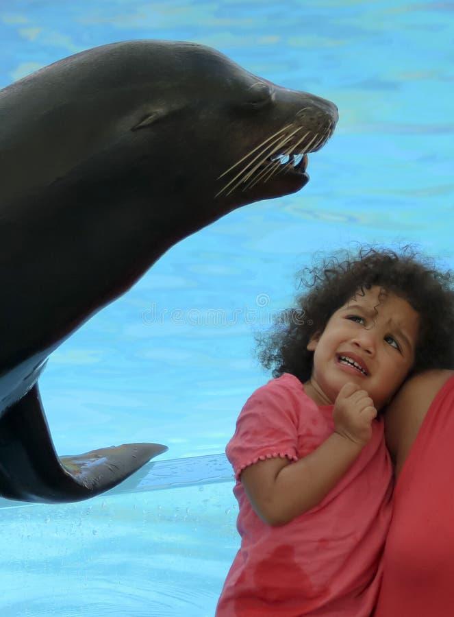 Een weinig Meisje Bang van een Vriendschappelijke Zeeleeuw in Delphinario, Sono stock foto's