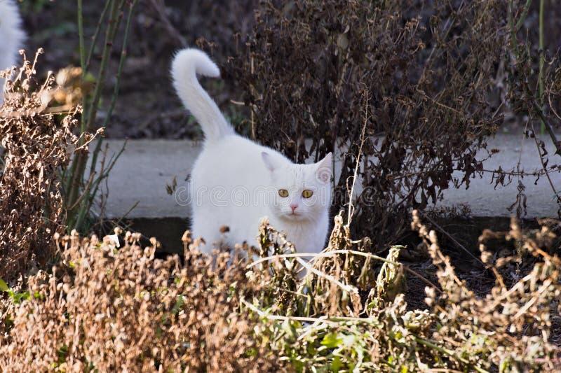 Een weinig witte kater stock foto