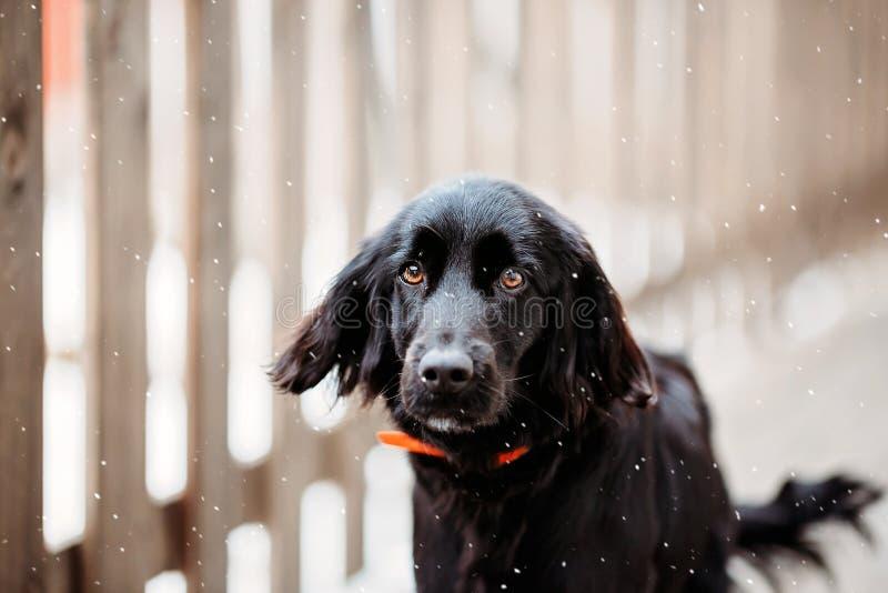 Een welke gelukkige dag van een hond stock afbeelding