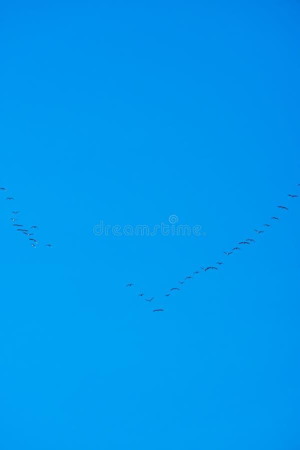 Een wig van vogelsvlieg stock afbeeldingen