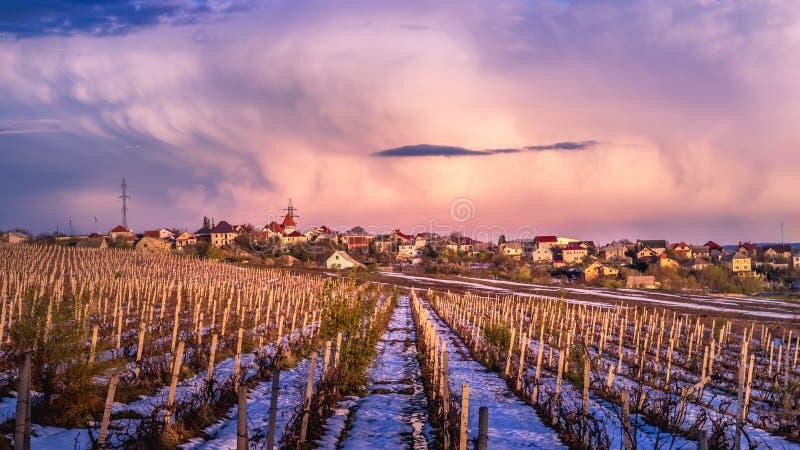 Een wijngaard in sneeuw tijdens dageraad in Chisinau, Moldavië stock foto's