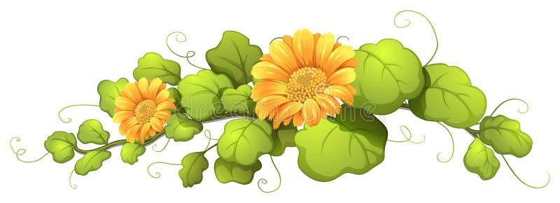 Een wijnstok met bloeiende bloemen royalty-vrije illustratie