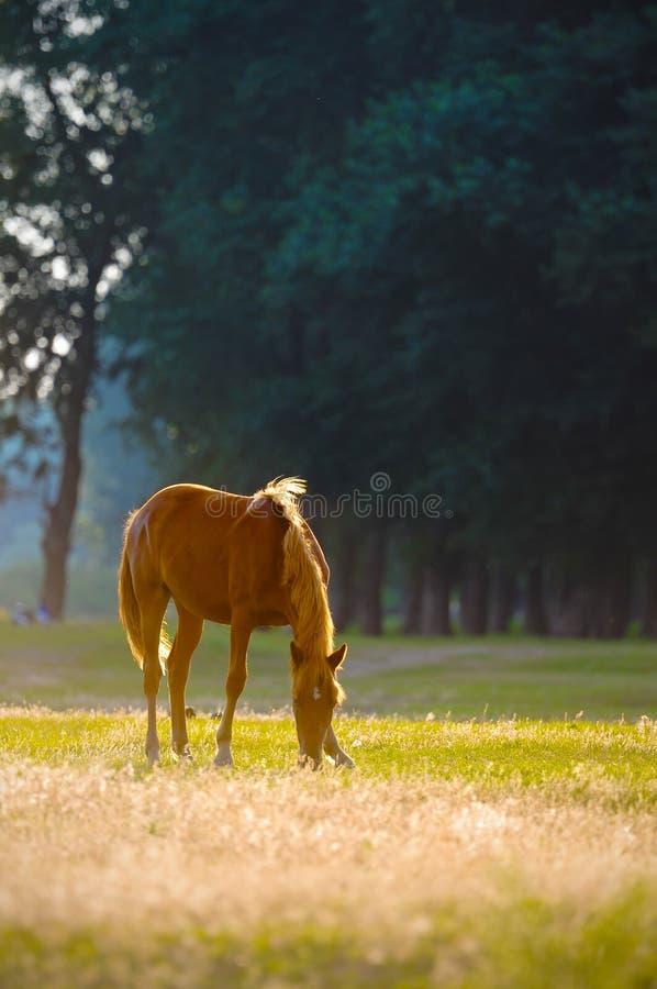 Een wild paard hoofdprofiel royalty-vrije stock foto's