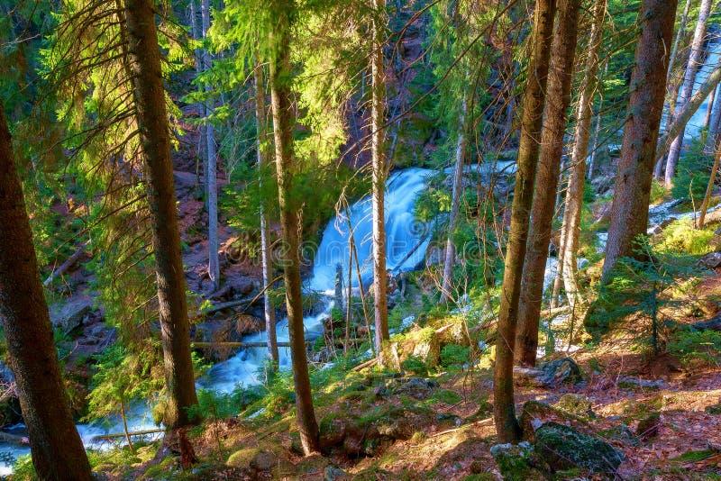 Een wilde stroom kruist het Beierse bos stock afbeelding