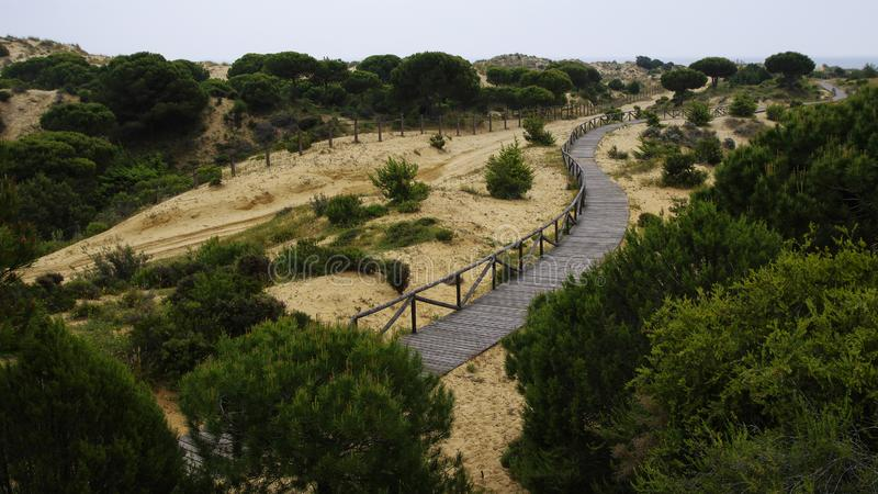Een windende houten promenade over de duinen dichtbij Matalascanas, Provincie Huelva royalty-vrije stock foto