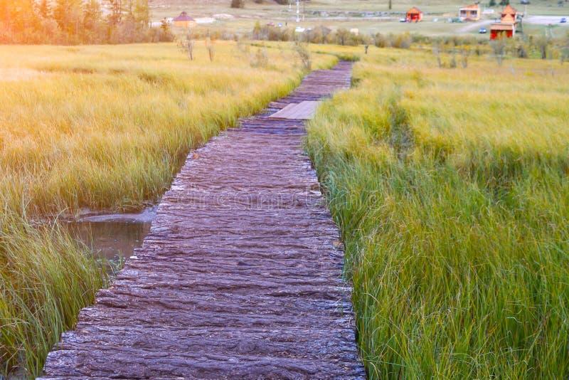 Een windende weg van hout voerde op een moeras stock foto's