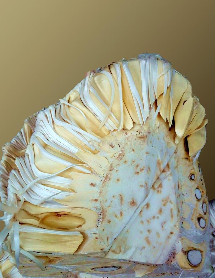 Een Wit Jong Jackfruit-Vlees stock fotografie