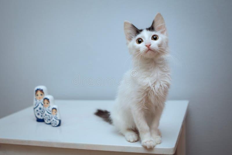 Een wit pluizig katje met een zwarte staart zit naast de het nestelen poppen royalty-vrije stock foto