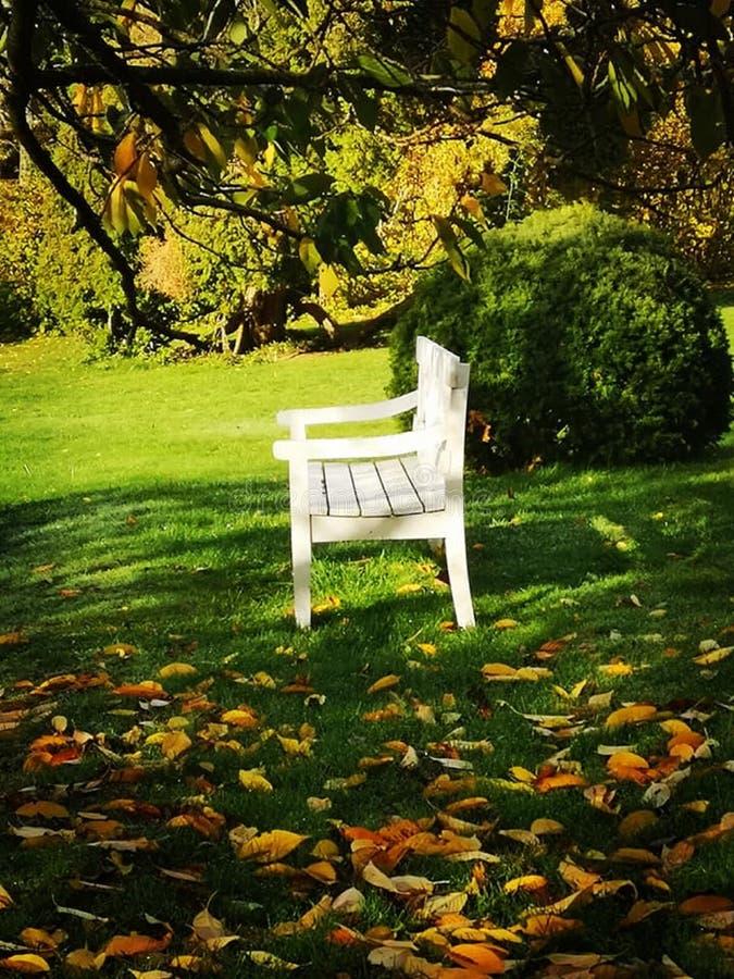 Een witte bank die zich alleen in de tuin bevinden stock afbeeldingen