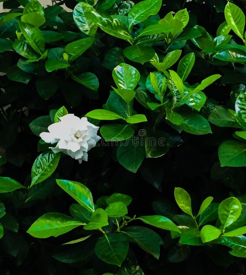 Een witte bloem royalty-vrije stock afbeeldingen