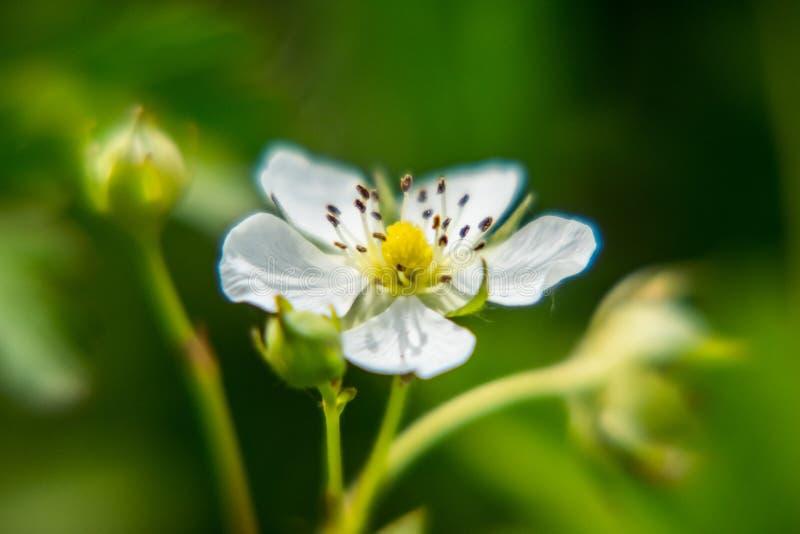 Een witte bloem royalty-vrije stock foto