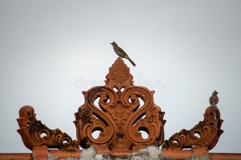 Een witte bruine huismus met zwarte ogen streek op een ornament Balinees huis neer stock fotografie