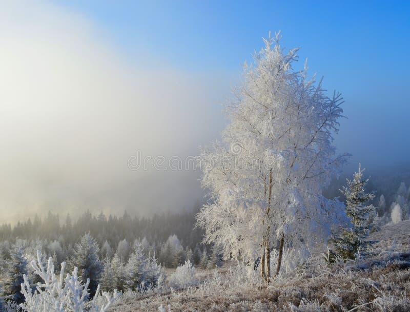 Een witte en blauwe ochtend stock foto