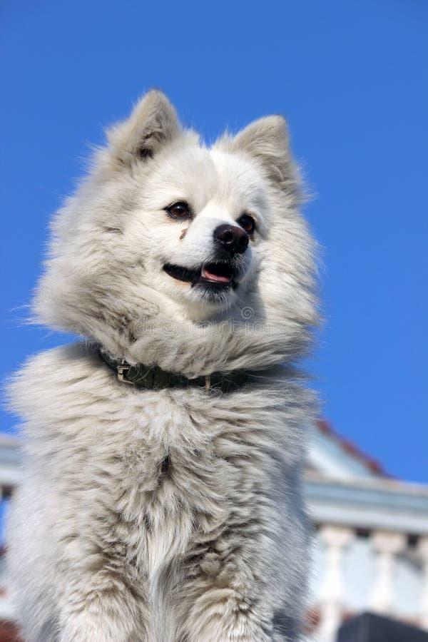 Een witte hondbrandkast die een huis bewaken stock afbeelding