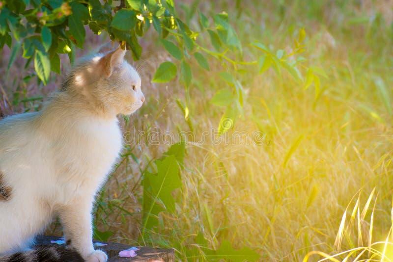 Een witte kat zit op de grond in het gras onder een boom en kijkt vooraan Beeld met tint royalty-vrije stock foto