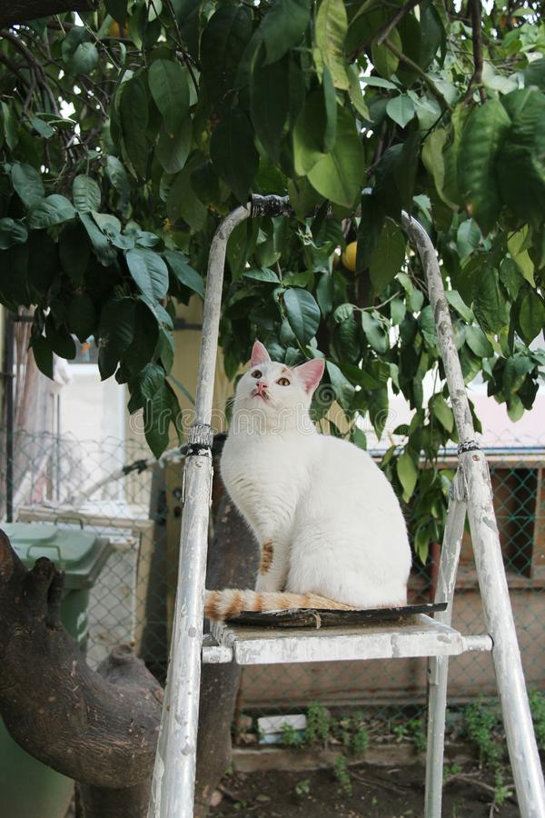 Een witte kat zit op een ladder onder een boom en ziet omhoog eruit royalty-vrije stock foto