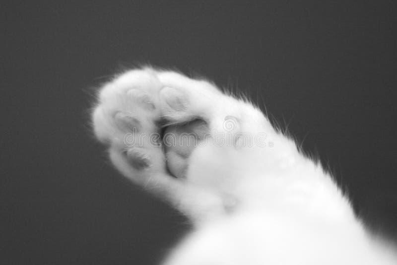 Een witte katten pluizige poot royalty-vrije stock foto's