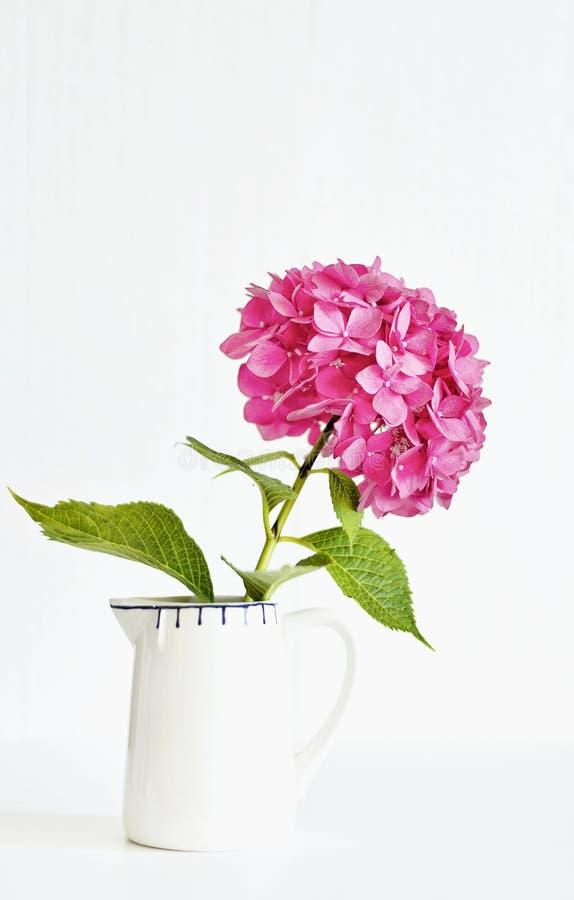 Een witte kruik met één enkele decoratieve roze hydrangea hortensia flowerhead tegen witte achtergrond stock fotografie