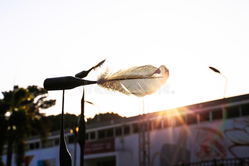 Een witte veer op de achtergrond van de zonsondergang royalty-vrije stock foto's