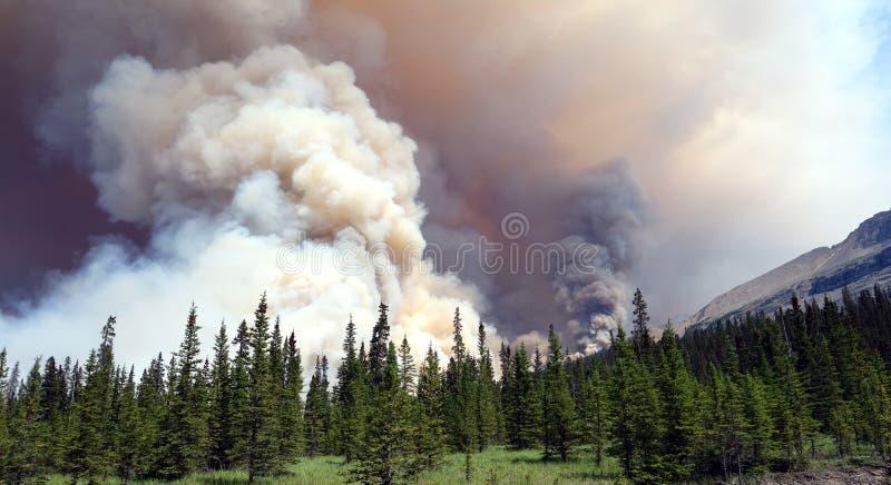 Een woeste bosbrand die bij banffpark opvlammen stock fotografie