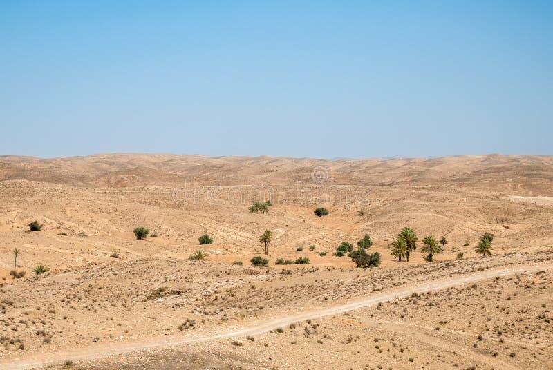 Een woestijnlandschap met palm en heuvels op een zonnige dag royalty-vrije stock foto