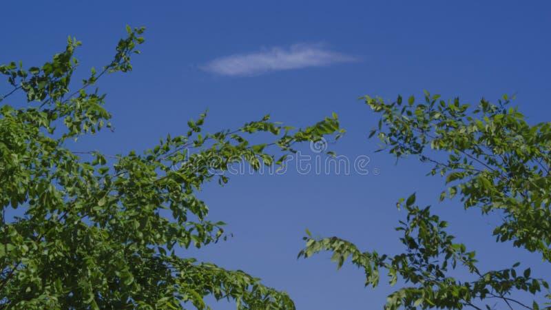Een wolk die in de wind drijven stock foto's