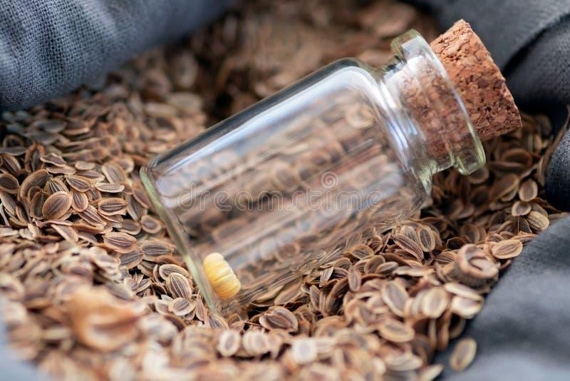 In een zak natuurlijk die vlas met zaden van installaties wordt gevuld is een glasfles met één bloemzaad De fles is gesloten met  royalty-vrije stock foto