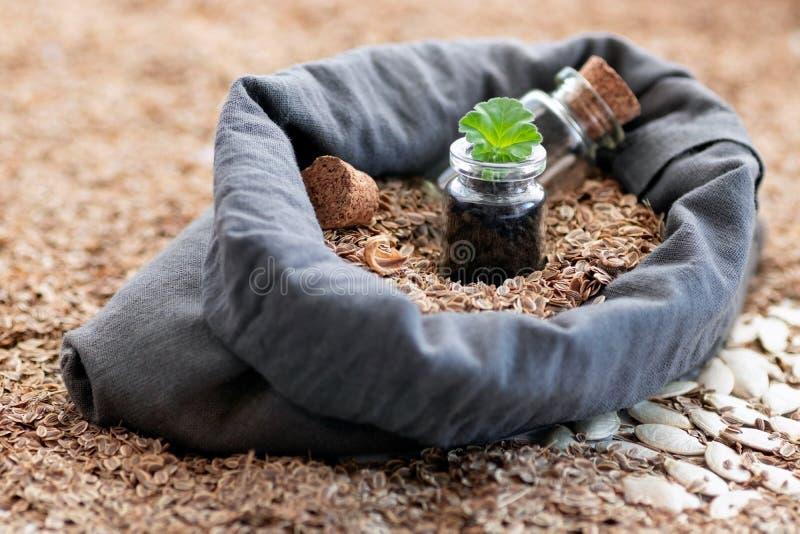 In een zak natuurlijk die vlas met zaden van installaties wordt gevuld is een glaskruik met een groen blad van een jonge plant Na royalty-vrije stock afbeelding