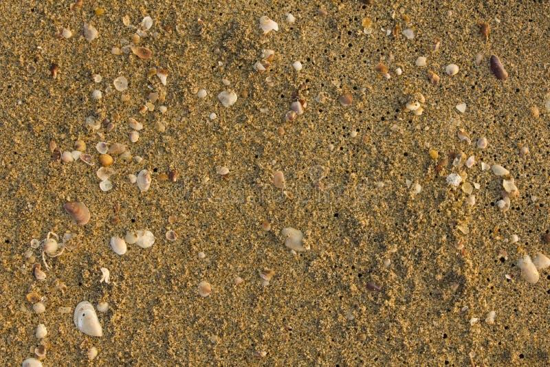 Een zand op het strand met zwarte gaten en zeeschelpenclose-up natuurlijke oppervlaktetextuur royalty-vrije stock afbeelding