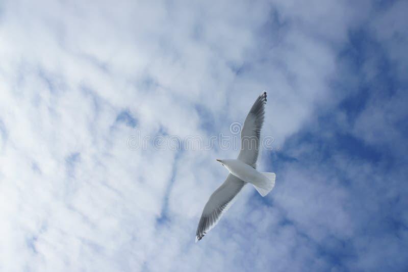Een Zeemeeuw in de hemel stock fotografie