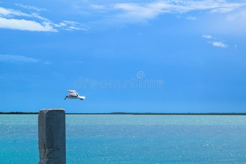 Een zeemeeuw drijft zacht over Bimini-Baai, de Bahamas af royalty-vrije stock afbeelding