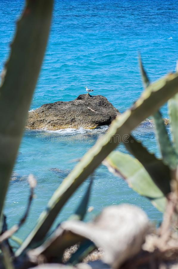 Een zeemeeuwvogel al die alleen op een rots door het Egeïsche overzees, de massieve installatie van aloëvera op de voorgrond word royalty-vrije stock fotografie