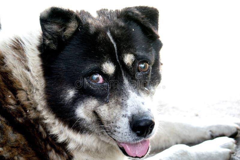 Een zeer oude en blinde hond, maar zeer zacht stock afbeeldingen