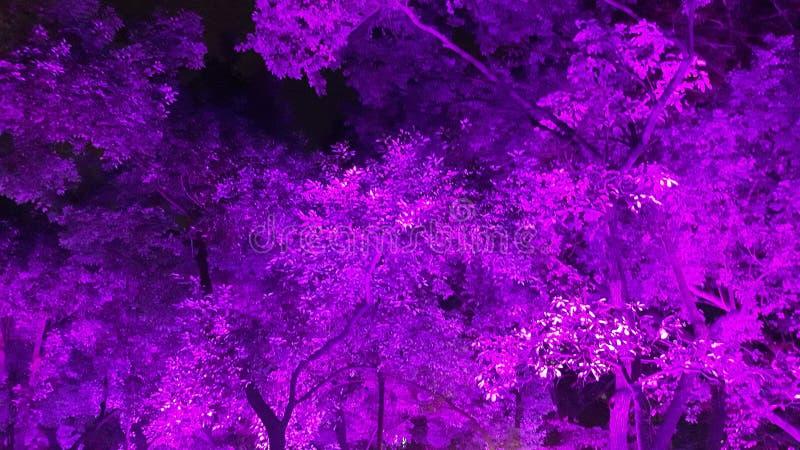 Een zeer violette uitbarsting stock foto