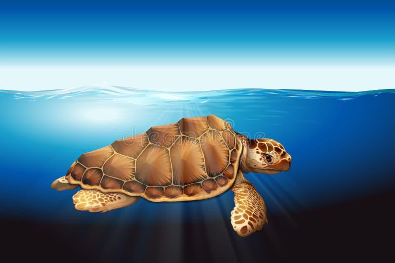 Een zeeschildpad vector illustratie