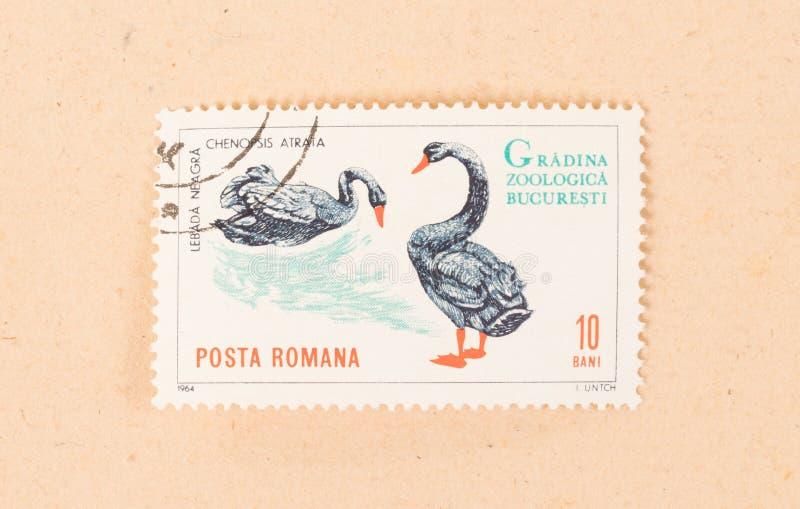 Een zegel in Roemenië wordt gedrukt toont een zwarte zwaan, circa 1964 die royalty-vrije stock foto's
