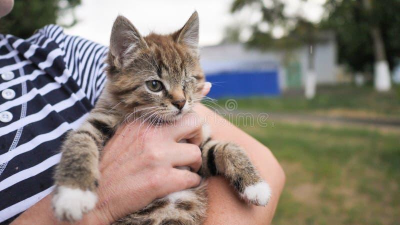 Een zitten de kleine bruine eenogige katjesgehandicapten in de wapens van een vrouw stock afbeelding