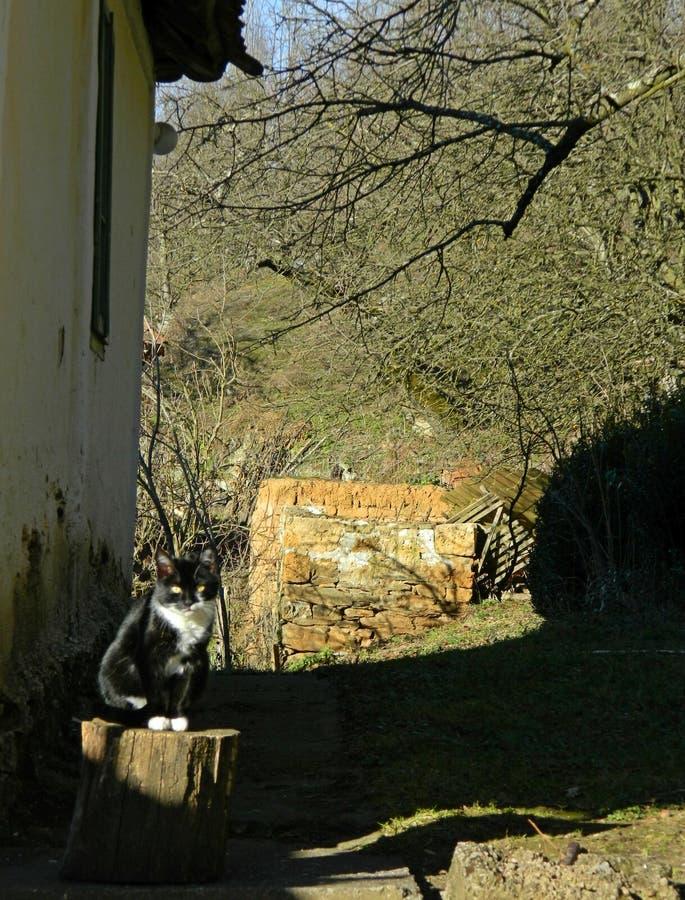 Een zitting van de dorpskat op een stomp stock foto's