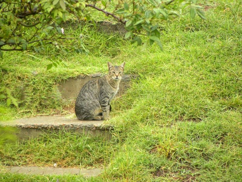 Een zitting van de gestreepte katkat op vloer stock fotografie