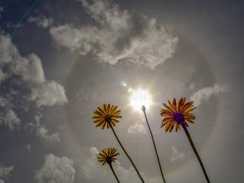 Een zonnehalo brights in de ochtendhemel royalty-vrije stock foto